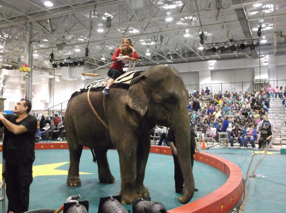lisashrinerscircuselephant